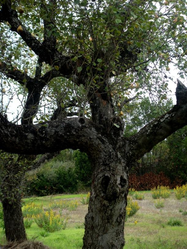 árvore com olhos e cabelos