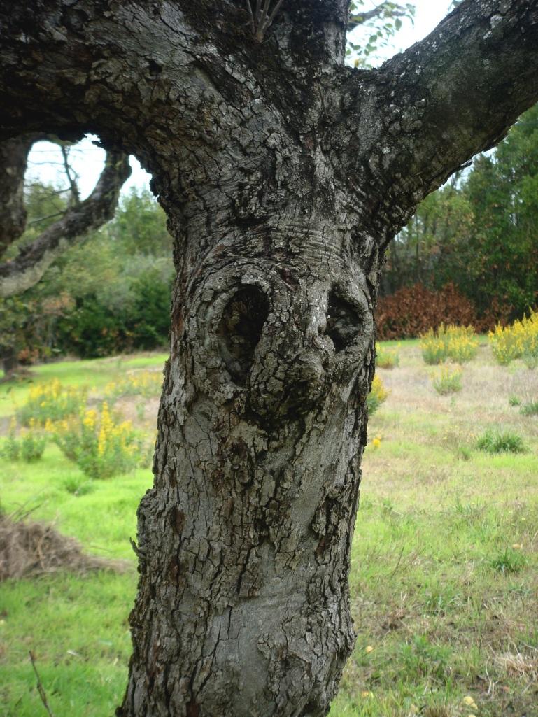 árvore com olhos