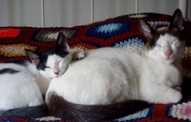 gatinhos na cama