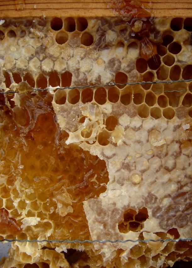mel serra d´ossa