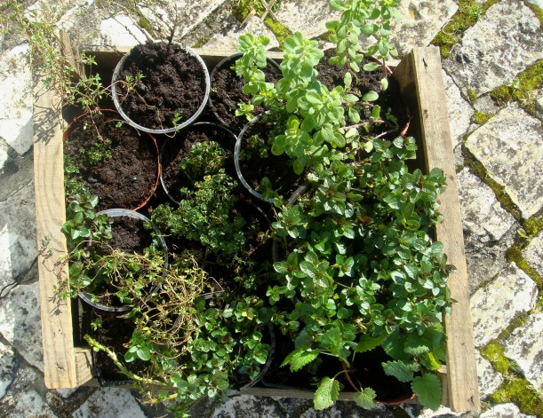 plantas para replantar