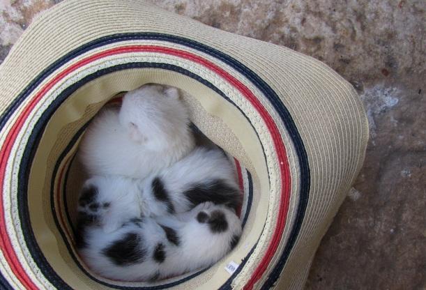 gatitos no chapéu 2014
