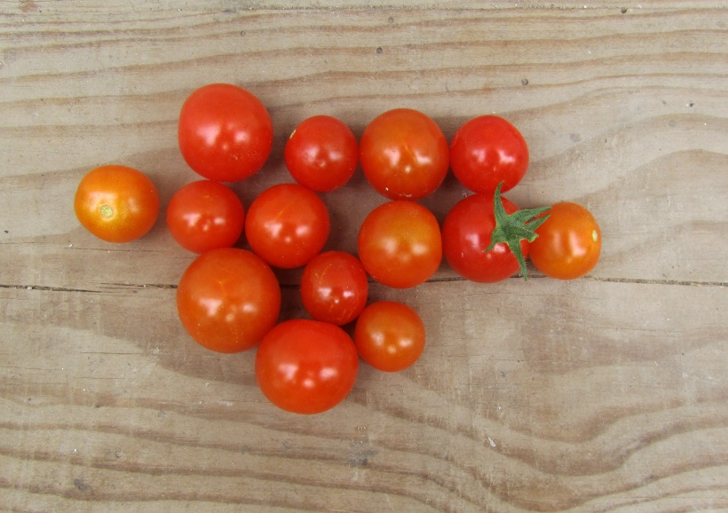 tomate cereja