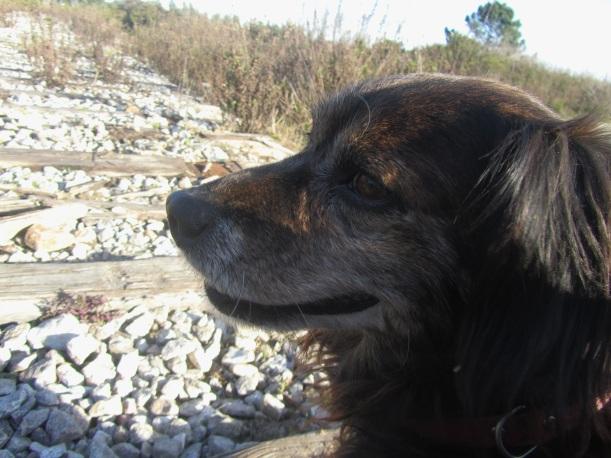 cão a sorrir