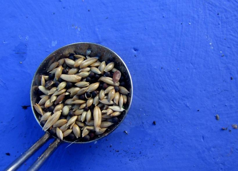 sementes de passarinho