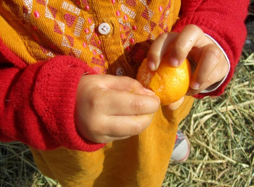 Descascar tangerina