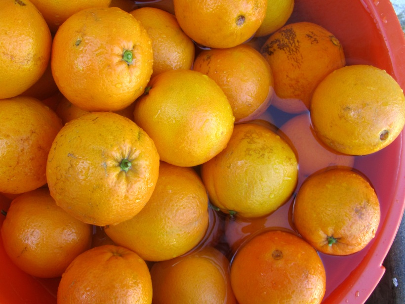 laranjas na água