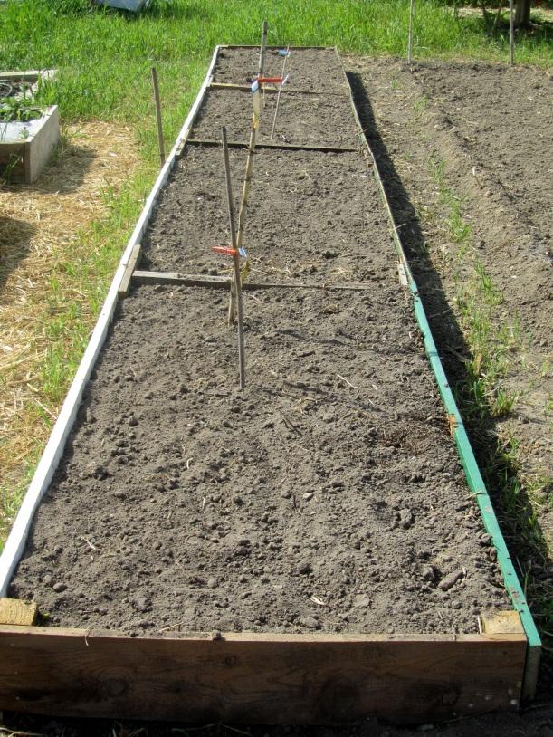 preparação do tabuleiro de cultivo