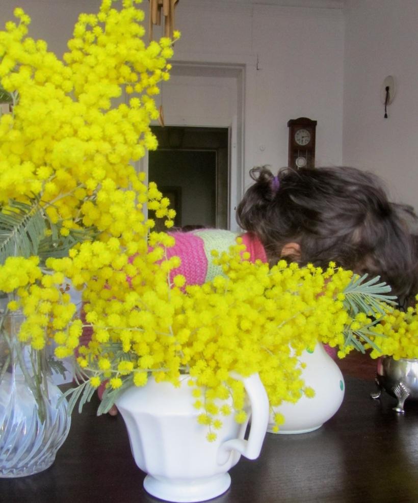 Mimosas nas jarras
