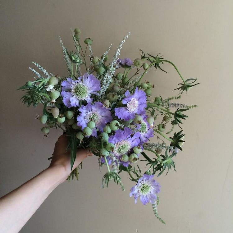 Flores Yasmin
