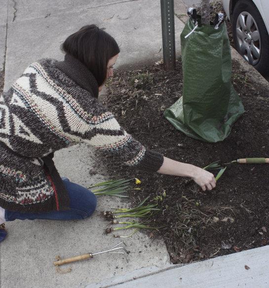 Plantar bolbos nas cidades