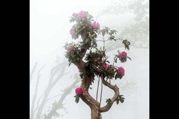 worldofpatricia fog