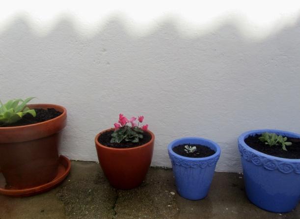 plantas transplantadas no crescente