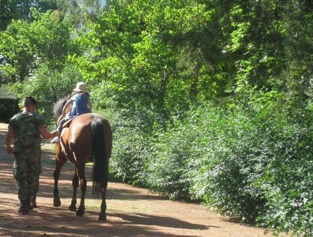 Brincar na mata 2016 cavalos
